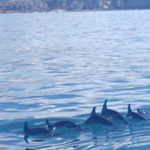 Dolphin Trips Gran Canaria – What to Expect
